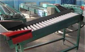 Automatic-Round-Vegetable-Weight-Grading-Machine