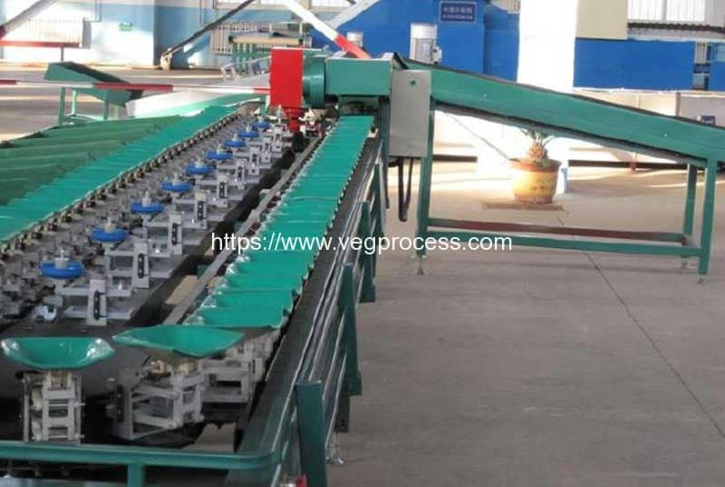 Automatic-Round-Vegetable-Weight-Sorting-Machine