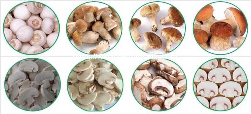 Mushroom-Cutting-Machine-Application